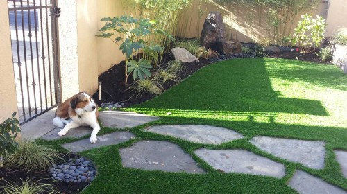 Ask about our total organic landscape and pet-friendly yard services.